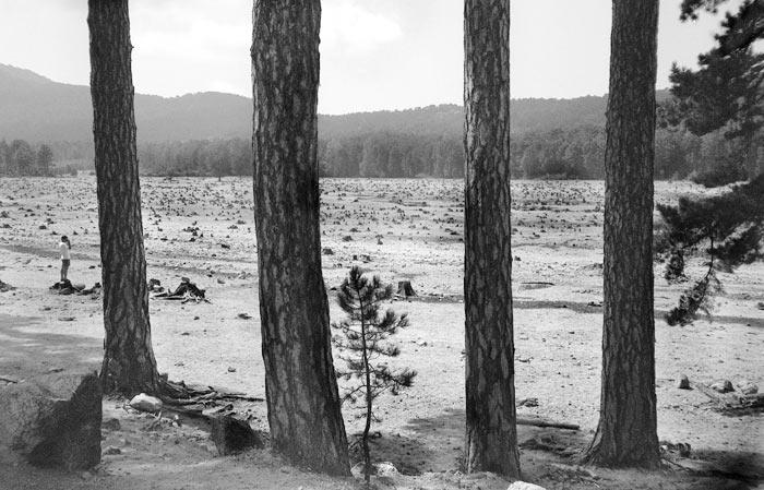 15-alberi-trees
