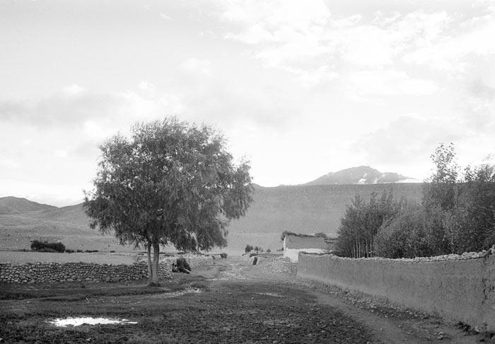 22-albero-nepal