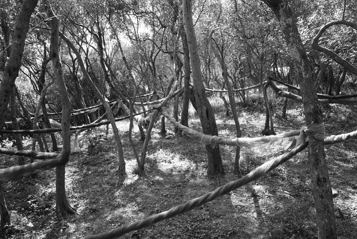 31-corde-nel-bosco