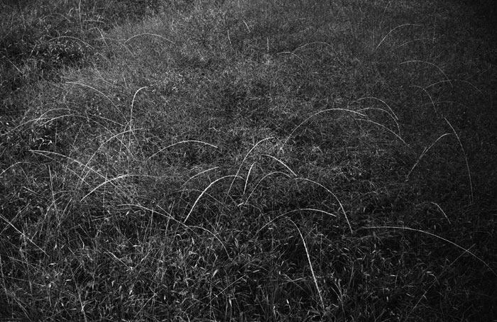 7-erba-in-luce