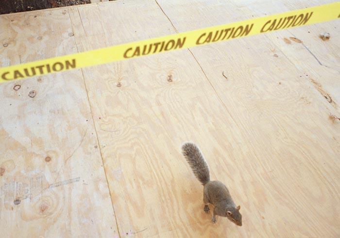 12-scoiattolo