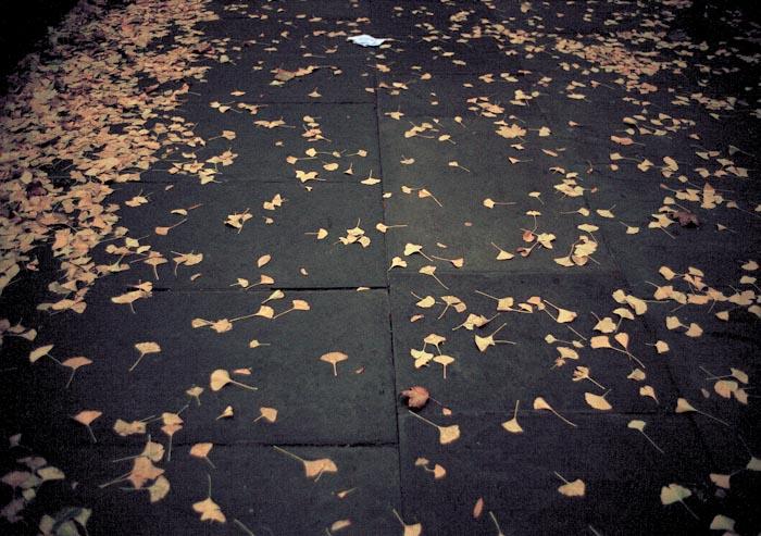 37-foglie-1