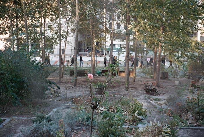 46-giardino