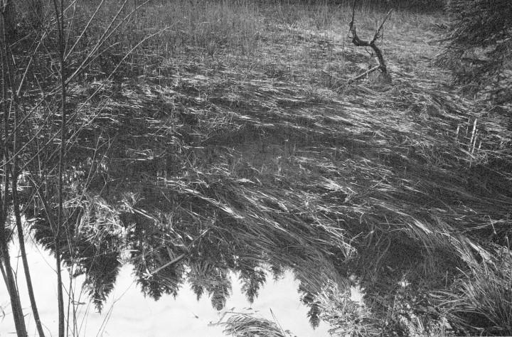 bosco rovesciato-scan2