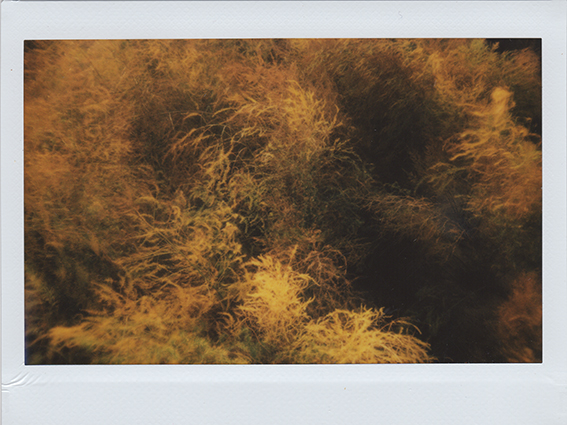 Polaroid 05-crop3-mini