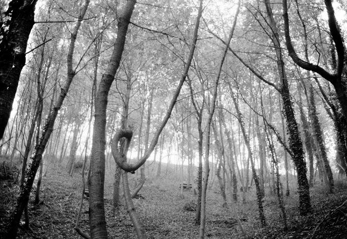 4-bosco-ramo-torto